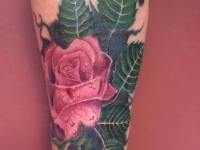 Roses_coverup